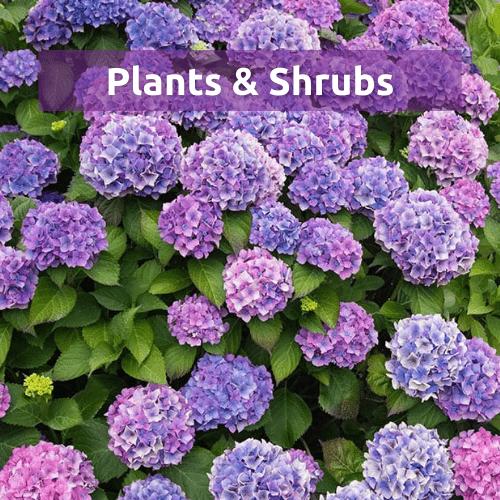 Plants & Shrubs